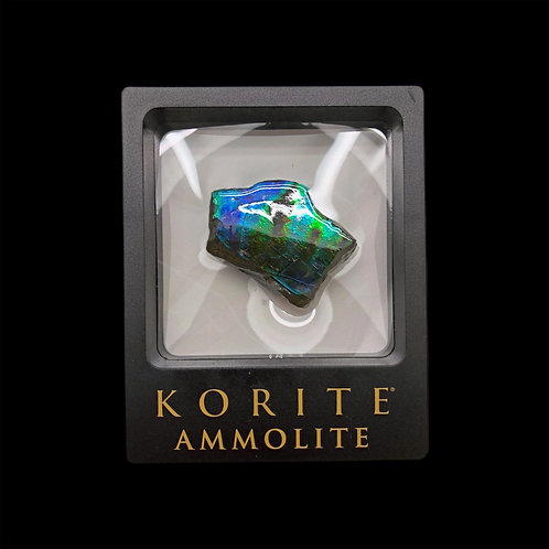 Ammolite Display