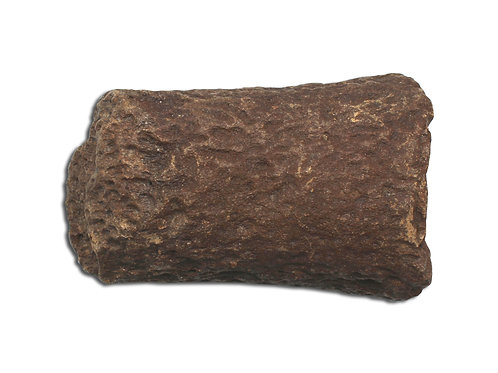 Medium Fossil Plesiosaur Paddle Bone