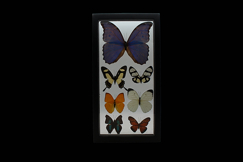 7 PIECE BUTTERFLY DISPLAY
