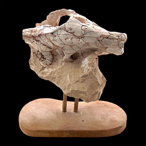 Early Mammal Skull - With Stand