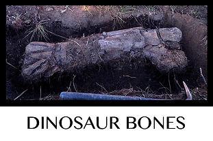 Button Dino Bones.jpg