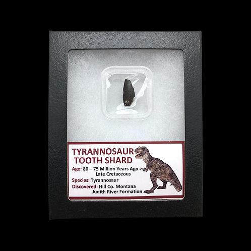 Tyrannosaur Tooth Shard