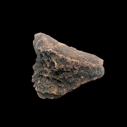 Fossil Mammoth Bone