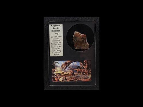 Coprolite Fossil Dinosaur Poop Display