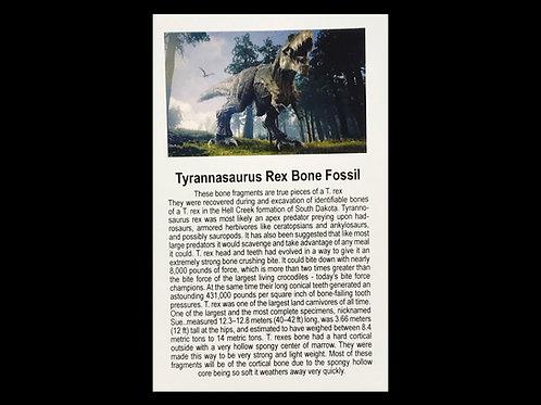 TYRANNASAURUS REX BONE FOSSIL FRAGMENTS