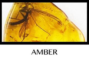Button Amber.jpg