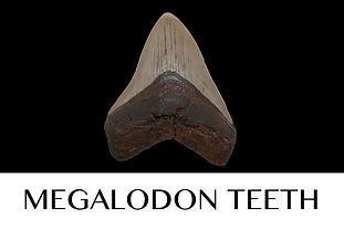 Button Megalodon 2.jpg