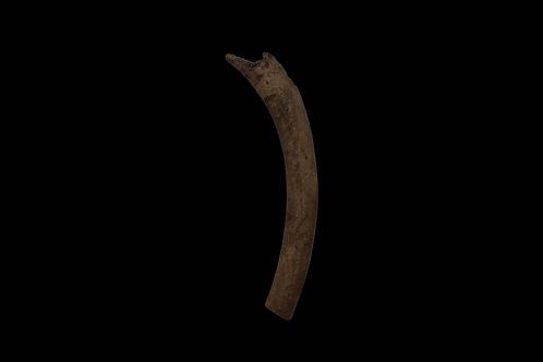 Eskimo Bone Tool Relic