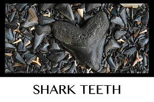 Button Shark Teeth(2).jpg
