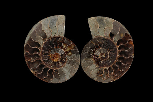 LARGE AMMONITE PAIR