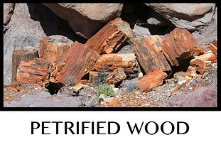 Button Petrified Wood.jpg