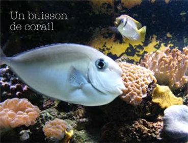 editions_buisson_corail.jpg