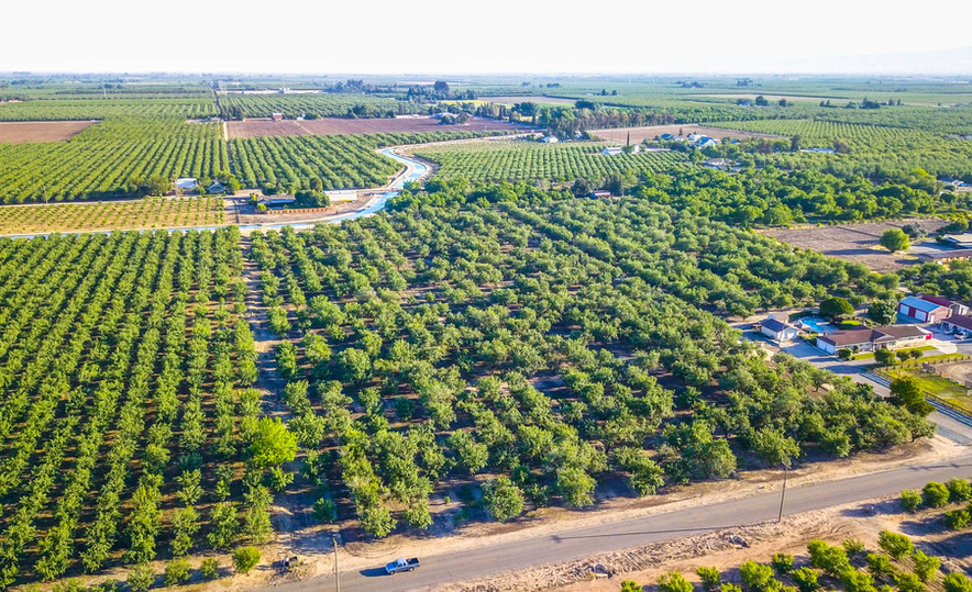 Aerial of an orchard in Modesto.