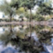 Parallel-worlds-of-water-mirror19.jpg