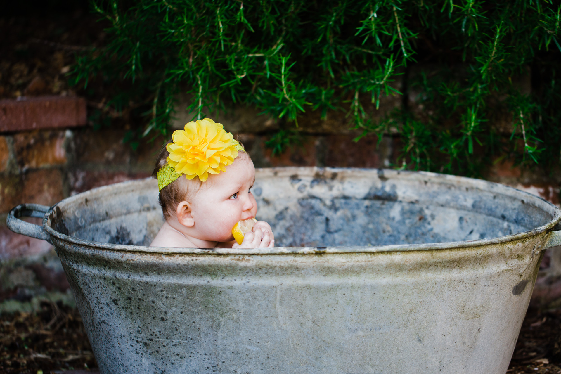Fruit Bath Sesison