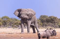 Etosha National park Safari tour