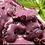 Thumbnail: Pulpo al Olivo (150 gr entre pulpo y salsa)