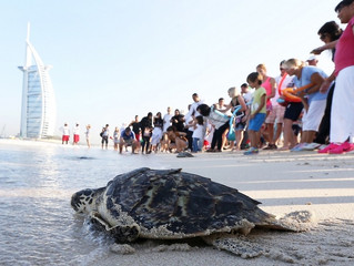 44 turtles released to celebrate 44th UAE National Day