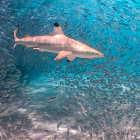 Shark Encounter-21.jpg