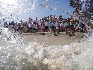 Sea Turtle Rehabilitation