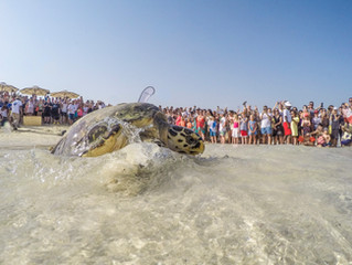 UAE sea turtles at risk of disappearing The species will become extinct if measures to save them not