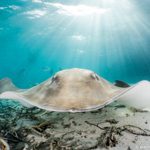Stingray Encounter-18.jpg