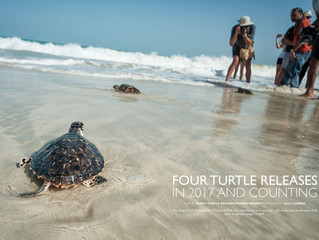 Four Turtle Releases in 2017 and Counting