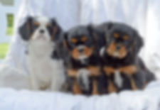Bootsie Litter Photo 2020.jpg