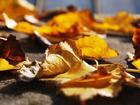 Listopadowe zadumanie