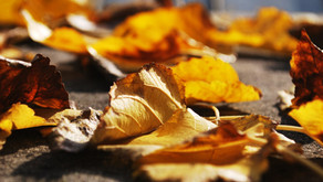 Is Fall the Best Season for Laser Treatments? The answer is…