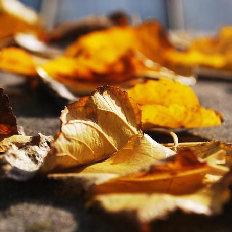 Setembro Dourado - Devoção e entrega