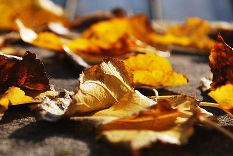 Gouden herfstbladeren B&B De Woestijn