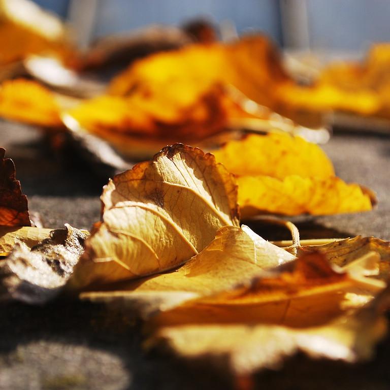 Fall Into Balance Ayurvedic Workshop