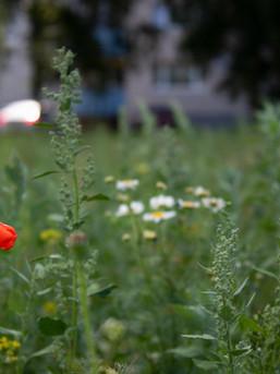 Lilleniit ootab rohimist 27.06.2021