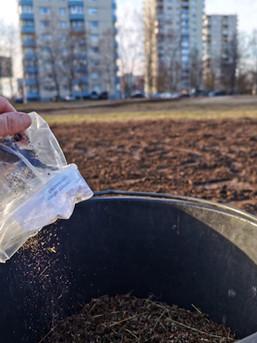 Lilleniidu seemnesegu külvamine varakevadel 2021.