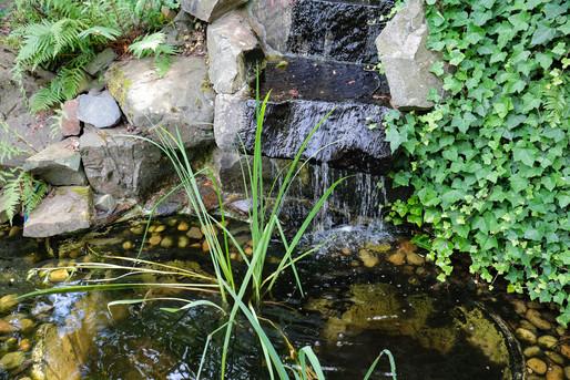 garden-pond-3646280_1920.jpg