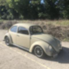 Beige beetle.jpg