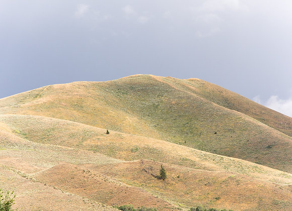 Elkhorn Hills #4