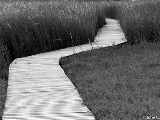 Wellfleet Boardwalk
