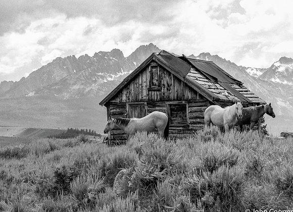 Sheltering Horses