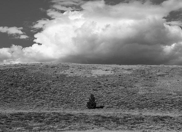 Elkhorn Hills #3
