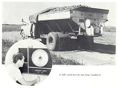 Edmonton Potato Growers History Warehouse Receiving