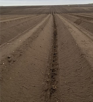 planted rows.jpg