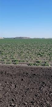 Norbest field 1.jpg