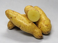 Banana Fingerling
