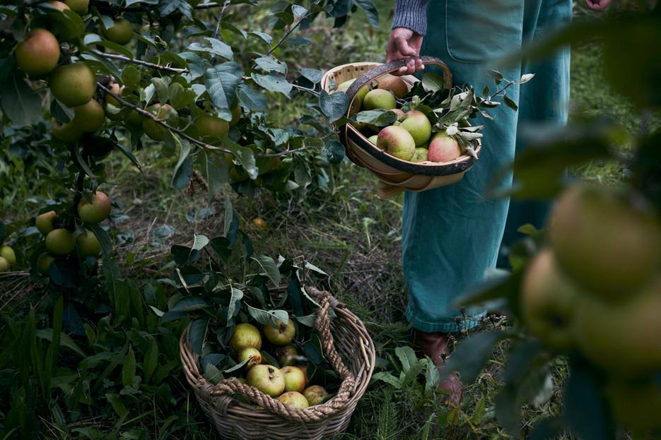 Daylesford Autumn Harvest