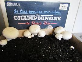 champignon de paris radis et capucine