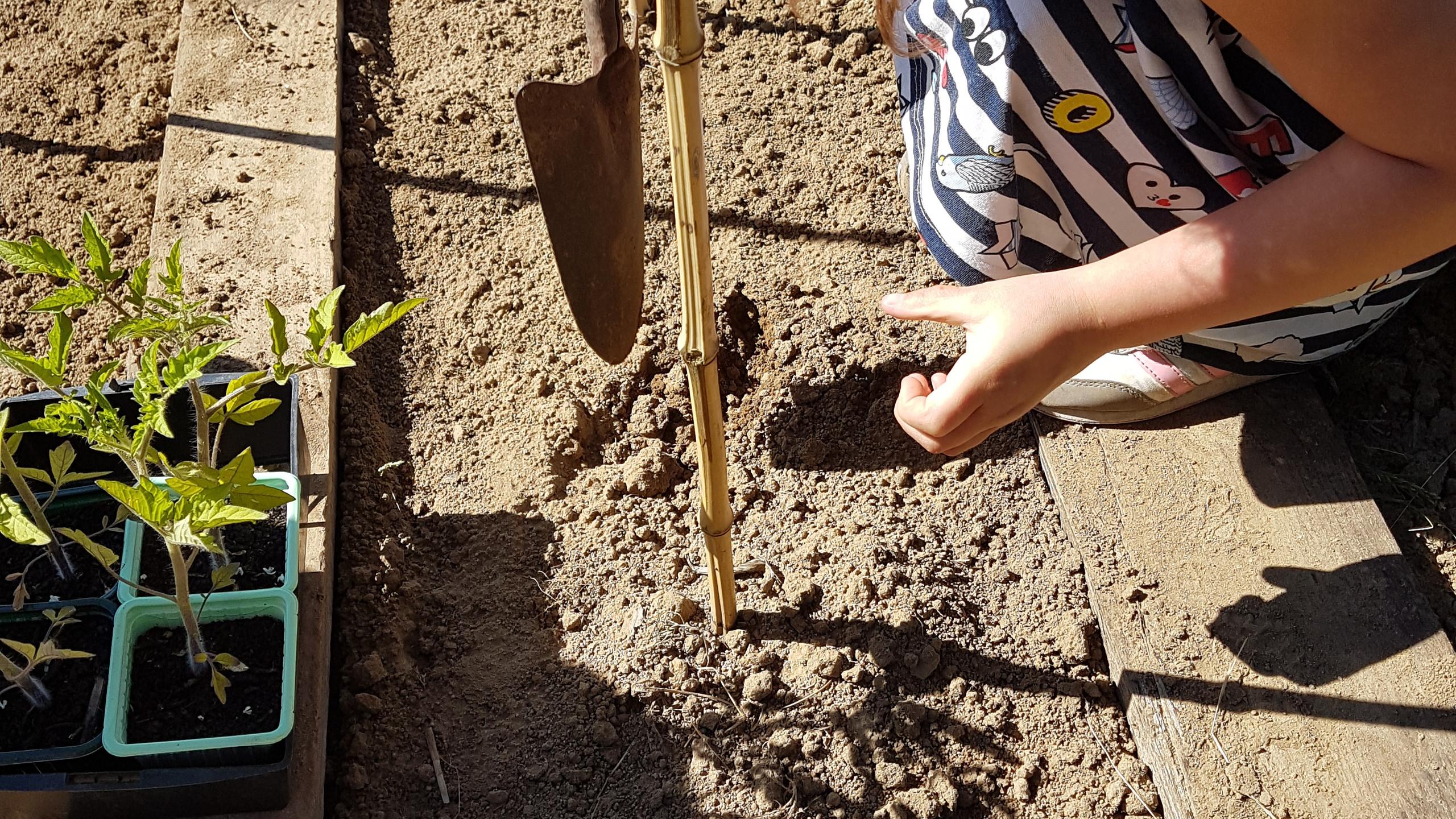 Plantation enfant
