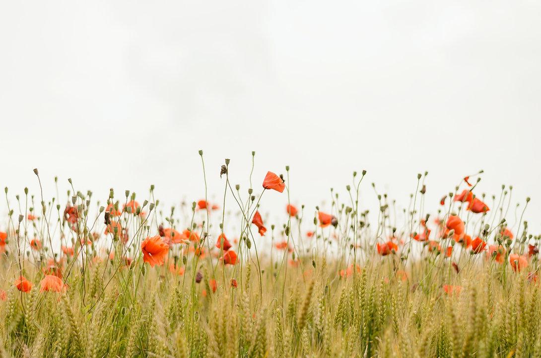 orange%20flowers_edited.jpg