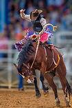Mystery cowboy bucks on wild mustang in